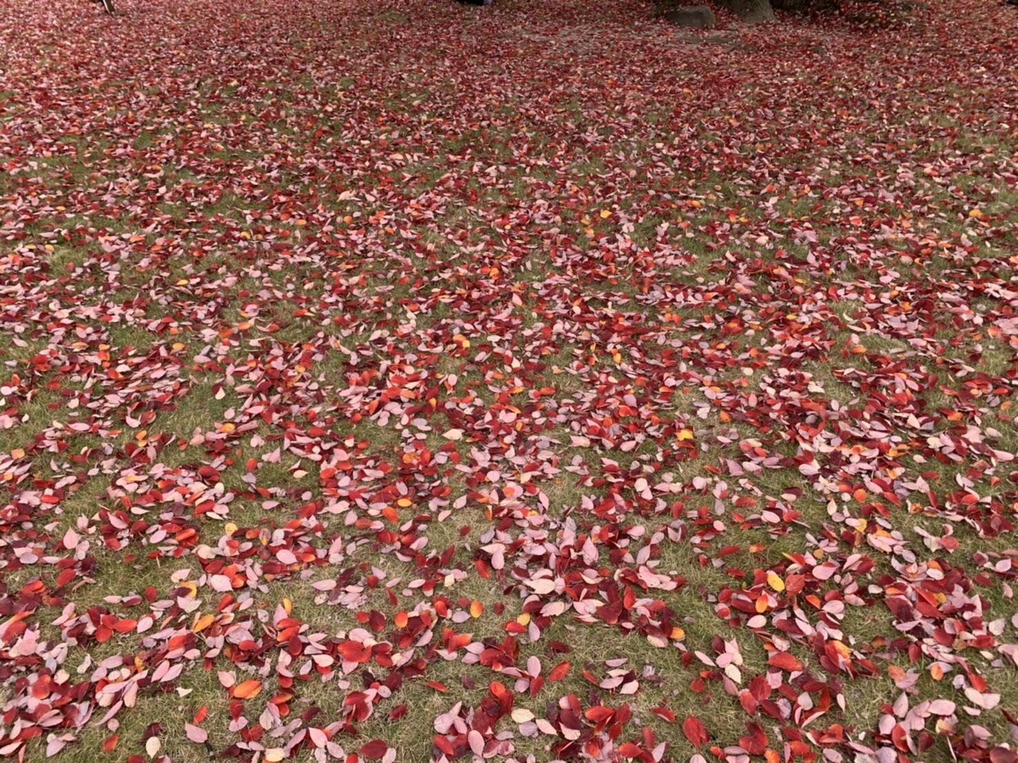 秋について思うこと